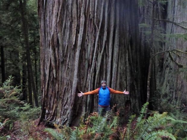 trees_jan2013
